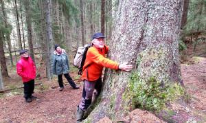 Vår ciceron Bengt Ehnström försöker omfamna jätten.