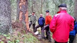 Bengt berättar om vilka mängder av insektsarter som livnär sig på döda träd.